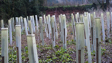 Young trees planted by the trainees in the LandWorks garden