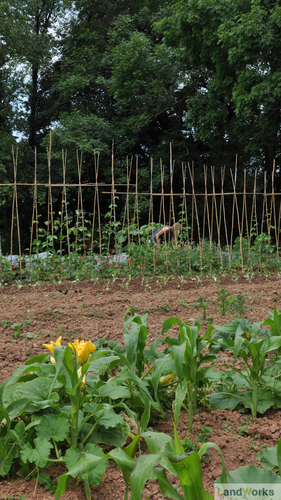 LandWorks Charity Devon: Veg Beds for the Market Garden